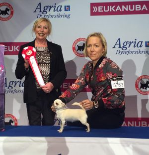 Best In Show Puppy and some new titles!