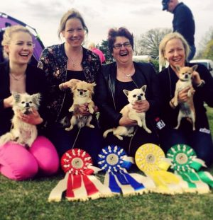 BISS1-4 at Swedish Chihuahua Speciality show!